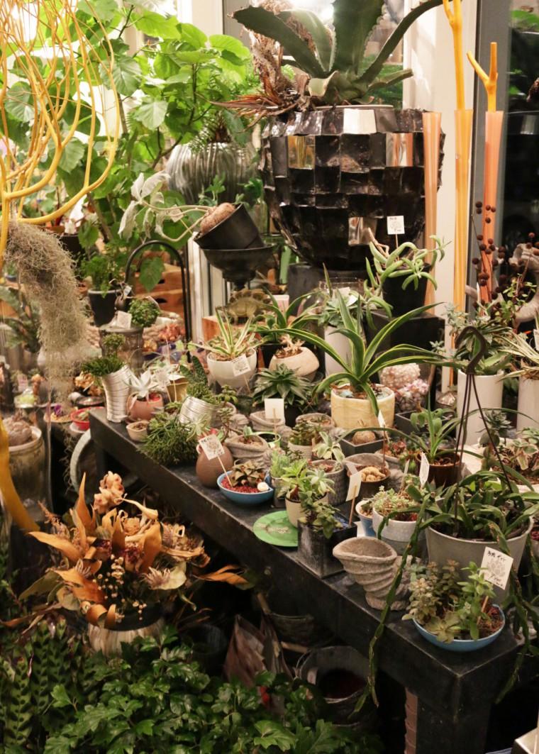 珍しい植物がいろいろ入荷中。