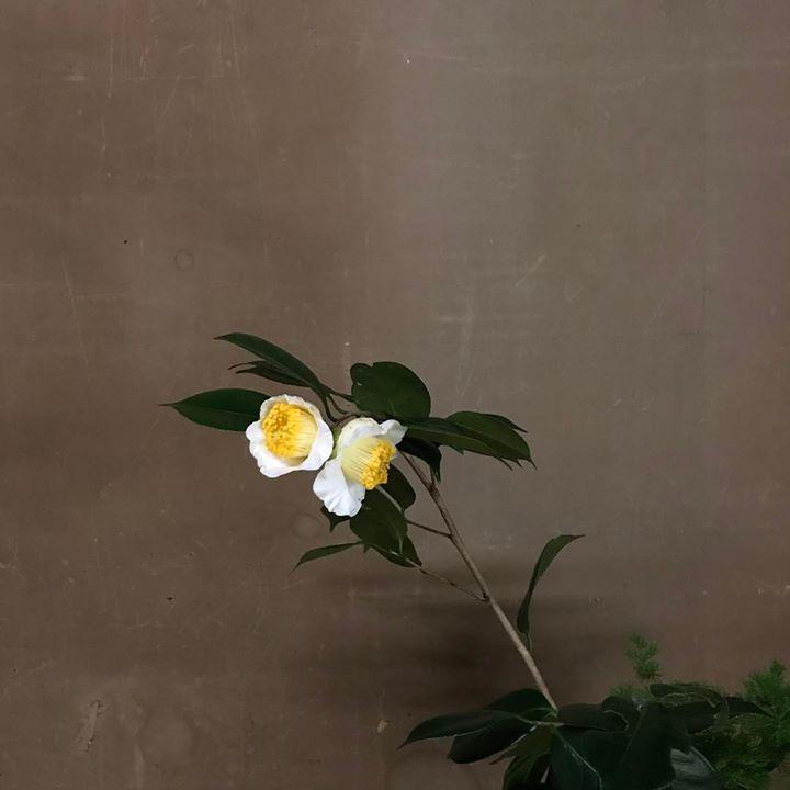 https://lotusgarden.base.ec
