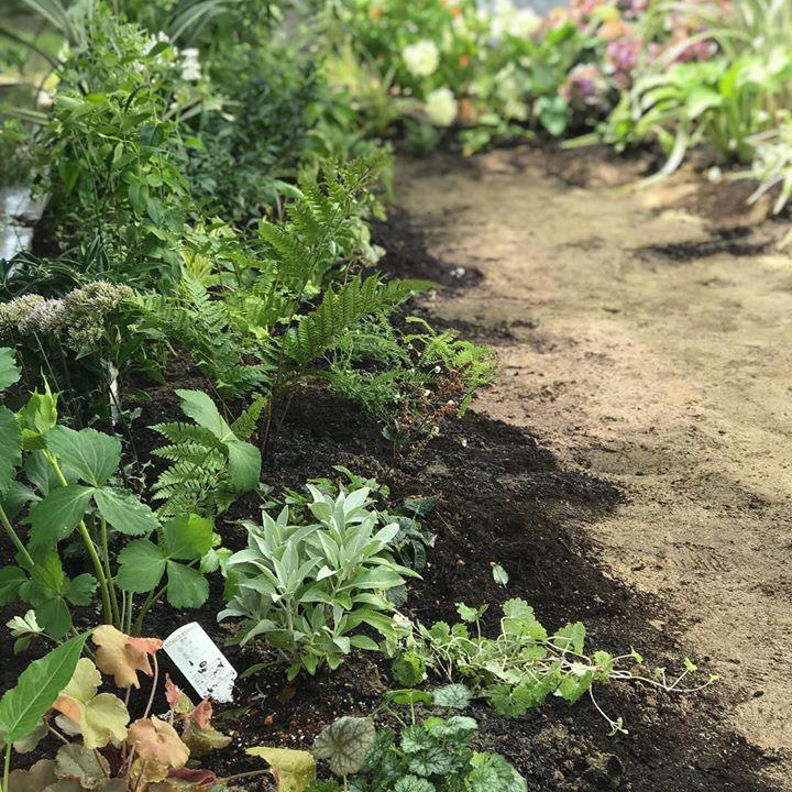 庭の施工#ガーデニング #シェードガーデン #ロータスガーデン #爽やか #summer #garden