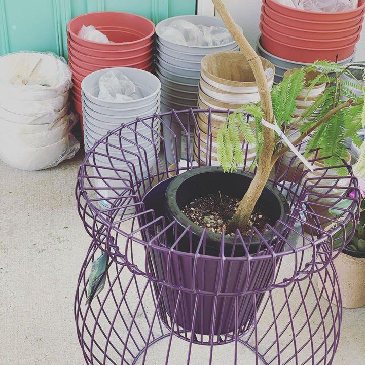 植え替え鉢、入荷。