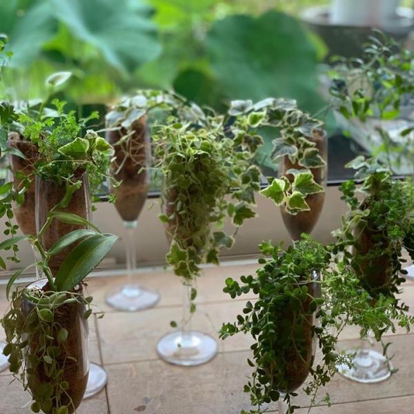 植物レッスン。